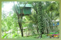 Silent Valley---------------31 (Binoy Marickal) Tags: india green tourism nature water rain kerala mala palakkad evergreenforest treaking silentvalleynationalpark nilgirihills mannarkkad mukkali kuzhur indiabinoymarickal