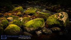Moss (Photographe - Sbastien Brodeur) Tags: canada green nature water river moss quebec magog