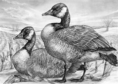 2014 Federal Duck Stamp Art Contest Entry 148 (USFWS Headquarters) Tags: art duck conservation stamp wetlands waterfowl