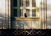 Bird & shutters , Athens , Greece (singingdaisy) Tags: athens greece autofocus frameit flickrbronzeaward heartawards photographyforrecreation musictomyeyesl1 niceasitgets thelooklevel1red vpul01 infinitexposure