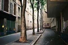 Trees in Paris