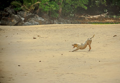 ObviousPhoto-46.jpg (Noth1ng 2 Off3r) Tags: dog animal puma name brand beach sand sunny yawn