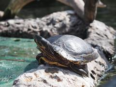 Valencia Aquarium and Marine Park, Spain (ChihPing) Tags: ocean park travel valencia aquarium spain marine olympus omd  oceanografic     loceanogrfic oceanogrfic em5