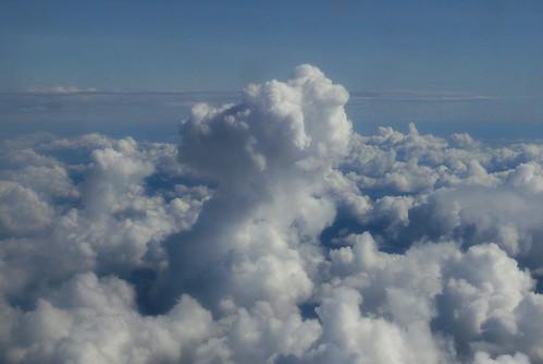 Cumulus mushroom