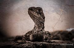 Godzilla. (Priiyan Sathiyaseelan) Tags: white black texture up animals amazing amazon close reptile grunge lizard godzilla reptiles creations d3300 conspirane priiyan sathiyaseelan