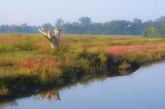 Painting The Wetlands (Jayhawk Explorer) Tags: lawrence ks wetlands bloom kansas favoritespot vibrance douglascounty bakerwetlands alongtheboardwalk artisticpainting sliderssunday ipiccy