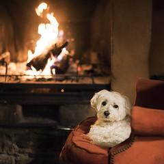Kiro chimenea (Azulada_) Tags: kiro chimenea fire dog sofa winter country campo rural