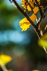 DSC_1256 (Darjeeling_Days) Tags:
