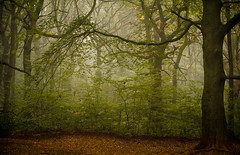 Reaching out (dannyhow2011) Tags: woods wood woodland forest mist fog enchanted leaves autumn seasons branches nikon d810 nikond810 sigma sigma70200 huddersfield fixby