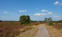 Renderklippen - Heerde - Veluwe (joeke pieters) Tags: 1300383 panasonicdmcfz150 renderklippen heerde veluwe gelderland nederland netherlands holland hei heide heathland moor moorland heather landschap landscape landschaft paysage schaapskooi
