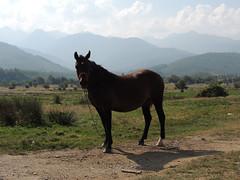 Transfagaran, Horse (Richard Leese) Tags: road transfagarasan romania transylvania trip journey