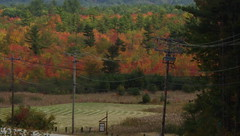Tuning Out the Telephone Wires - IMGP6540 (catchesthelight) Tags: trees fall foliage fallfoliage leaves colorchange marsh marshmaples nh autumncolors autumn