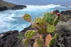 DSCF8109 (codrin44) Tags: anaga canarias joana masca taganana teide tenerife yves mer