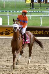 2016-11-06 (46)-1 r3 Horacio Karamanos on #8 Marabea at Laurel Park - winner (JLeeFleenor) Tags: photos photography md marylandhorseracing racing track laurelpark horaciokaramanos jockey   jinete  dokej jocheu  jquei okej kilparatsastaja rennreiter fantino    jokey ngi horses thoroughbreds equine equestrian cheval cavalo cavallo cavall caballo pferd paard perd hevonen hest hestur cal kon konj beygir capall ceffyl cuddy yarraman faras alogo soos kuda uma pfeerd koin    hst     ko  winner