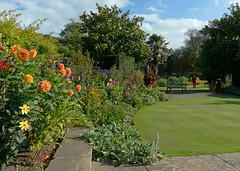 Woman in Kilver Court Gardens (john atte kiln) Tags: kilver court sheptonmallet autumnlandscape landscape outdoor alpines flowers grass laym women distantfigure womaninred trees bushes flowerbed bench hedges branches pavingstones dahlias colourful colorful