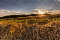 Sunset in the field (tomaskriz1) Tags: flare lens sunset yellow harvest wheat magic grain moravian trees tree sky season scenic scenery rural plant outdoor nature landscape land idyllic horizon green grass forest field farm evening environment day countryside country cloudy clouds cloud beauty beautiful background agriculture