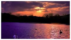 My magic world (aminekaytoni) Tags: magic lake sunset sunrise canon canon50d 1785mm canon1785mm landscape nature artistic light leuven belgium belgique coucher de soleil park parc