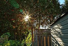 Autumns In The Air (Sue90ca Glorious Autumn) Tags: canon 6d autumn light sun burst