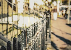 (Rhia.photos) Tags: fence fenced fencefriday happyfencefriday street streetshot streetphoto capture light colours dublin ireland irish ire iron ironwork angle perspective image photo photograph photography depthoffield dof