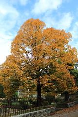 Autunno al Giardino Boboli. (Federica Zampaolo) Tags: autunno giardino boboli firenze autumn foglie colours