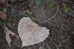 the river of life (Pejasar) Tags: brown ground led fallen veins river life roads paths autumn fall tulsa oklahoma