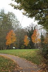 IMG_8979 (Geoff_B) Tags: badockswood bristol walkinthewoods autumn november unprocessed unedited