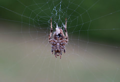 Web Master (Z.M.W's Photography) Tags: macro spider bug closeup