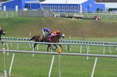 2016-11-06 (43) r3 Horacio Karamanos on #8 Marabea for the win at Laurel Park (JLeeFleenor) Tags: photos photography md marylandhorseracing racing track laurelpark horaciokaramanos jockey   jinete  dokej jocheu  jquei okej kilparatsastaja rennreiter fantino    jokey ngi horses thoroughbreds equine equestrian cheval cavalo cavallo cavall caballo pferd paard perd hevonen hest hestur cal kon konj beygir capall ceffyl cuddy yarraman faras alogo soos kuda uma pfeerd koin    hst     ko  winner