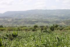 Arba Minch, Ethiopia (Thomas Andersen) Tags: arba minch ethiopia