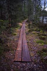 DSC_4127 (Unknown Explorer from Finland) Tags: kirkkonummi kirkkonummimeiko luonto luontokuva suomi finland
