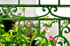 A ROSE a garden a friend ... (dimitra_milaiou) Tags: garden flowers green nature happiness red day love lovely light greece greek island andros nikon d milaiou dimitra detail fence inside outside outdoor thoughts view looking pattern door yard color colour d90 90 europe lines architecture tradition 50mm f18