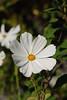 20160924_Cinq_Sens_Yvoire (9 sur 13) (calace74) Tags: fleurs macro jardinsdes5sens yvoire rhonealpes foretderipaille hautesavoie nature panorama thononlesbains