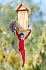 Hanging Around the Bird Feeder. (LisaDiazPhotos) Tags: elf shelf bird feeder wild finch lisadiazphotos