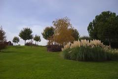 Juan Carlos I (TrustyOldGear) Tags: juancarlosi parque árboles naturaleza plumeros flora
