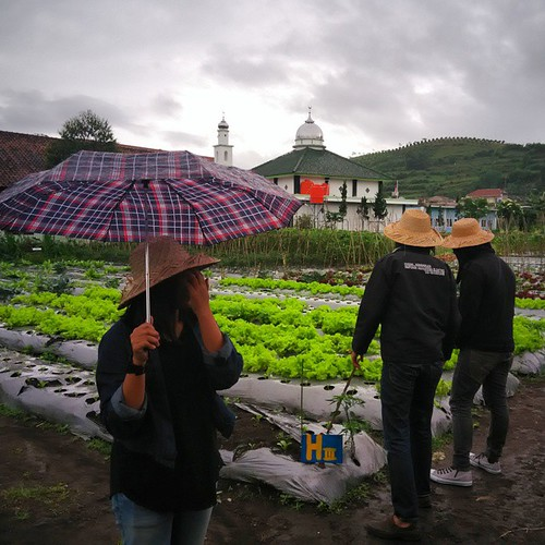 Sunday Morning at Garden, proud to be Agriculture Country #Agriculture #Bandung #Lembang #BegoniaGarden #indonesia #Garden #Farm