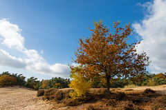 Herfst 2016 op de Veluwe (johan wieland) Tags: 2016 veluwe autumn herfst kootwijk kootwijkerzand gelderland netherlands nl