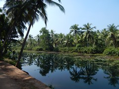 Villages Near Calicut Kerala Photography By CHINMAYA M (9)