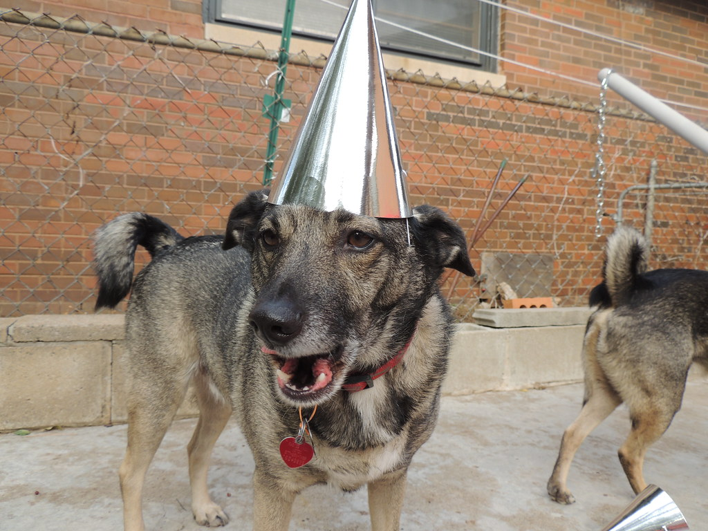 Dog Birthday Cake Okc