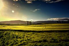 Fields that Glisten (Kevin_Jeffries) Tags: sheep light glisten shining sunlight nikon nikkor d7100 jeffries crop tracks tree hill flickr