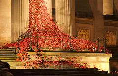Weeping Window Explored 13/11/2016 (David Chennell - DavidC.Photography) Tags: liverpool remembrance remembranceday armistice weepingwindow poppy poppies armisticeday merseyside stgeorgeshall