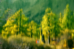 Water trees (Mel s away) Tags: daocheng sichuan china    mtchenresig  chanmelmel mel melinda melindachan water reflection mirror tree plant autumn larch  pine  nature reserve snowmountain