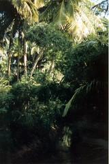 198112.240.indien.pondicherry (sunmaya1) Tags: india puducherry