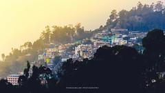 Kodaikanal (dtrajan) Tags: estates hillstation nature sunshine tamilnadu beauty bliss fog green india kodaikanal landscape light matte mist morning mountains scenic skies south travel trees view westernghats