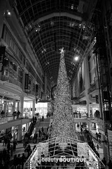 DSC06746 (Moodycamera Photography) Tags: cityoftoronto eatoncenter baywondows nighttime sony a6000 hdr blackandwhite downtown handheld dundassquare ttc cityhall nathanphillipssquare iceskating christmastree lights family aryanna norstrom