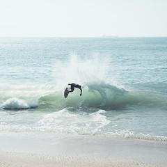 seal13 (David Behar) Tags: seal beach california skimboarding
