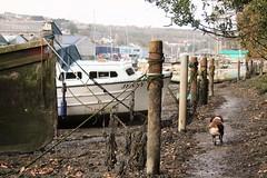 Penryn Quay, Cornwall, (cazzycoffeegirl) Tags: penryn quay wreck boat mud