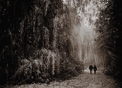 Walk into the cold forest (marielledevalk) Tags: outdoor tree trees forest wood landscape plant people walking sepia surreal light nature holland dutch netherlands