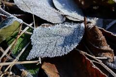 ice (kyry2010) Tags: ice ghiaccio brina inverno winter