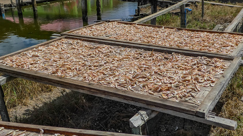 Drying shrimps