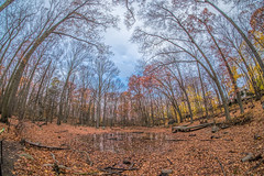 Rye Pond (JMS2) Tags: ryepond nature fisheye lake pond autumn fall westchestercounty